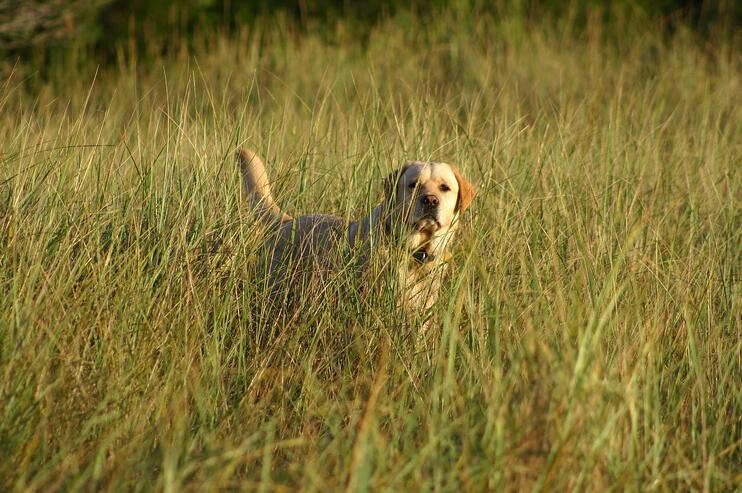 Calley in the beach grass